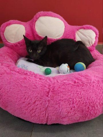 Mira – 8 mois – jeune chatte timide