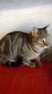 Bibou  - gentil chat  désemparé