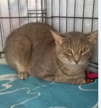 NEMO  – né le 02/08/2019 – beau chat calme
