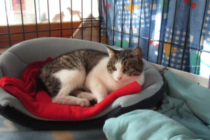 NETTY - 2 ans - jeune chatte timide