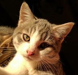 Noah -1 an - chat aventureux