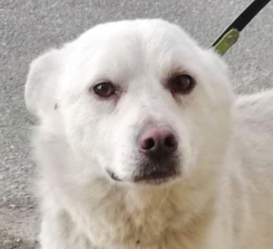 Noël chien mâle croisé Corgi 8 ans