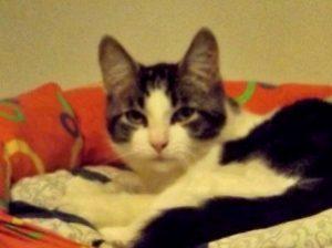 ONI - 6 mois - chaton espiègle
