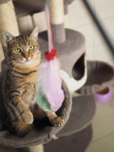ORIGAN - bientôt 2 ans- jeune chat gentil et dynamique