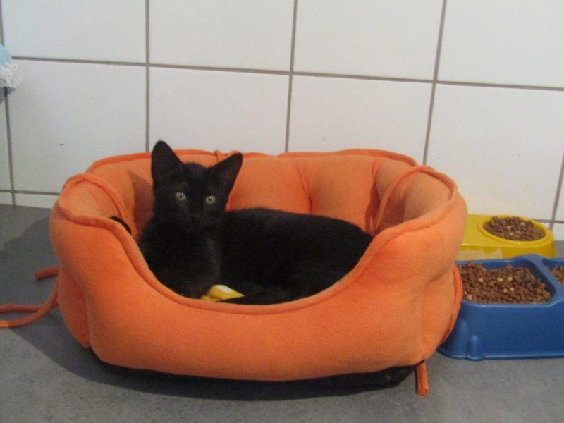 FELIX – 5 mois – chaton timide