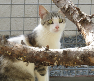 ORNA - 1 an passé  - jeune chatte discrète et maternelle