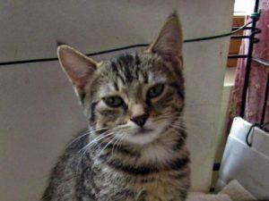 OUNA - 1 an  - jeune chatte  craintive
