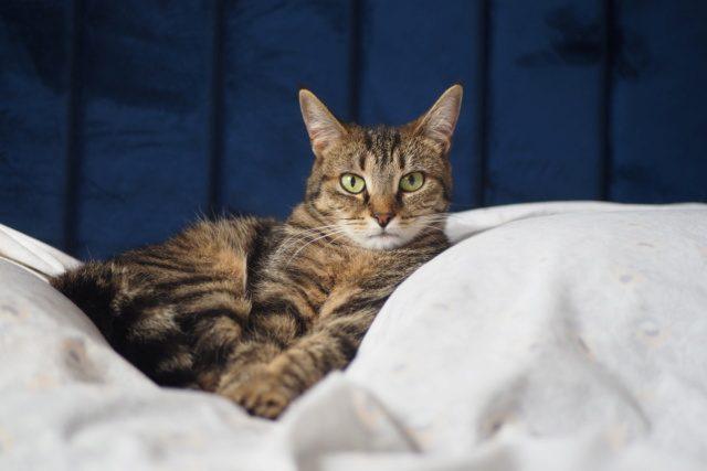 OUNA  l'amie des chats –  née le 01/06/18