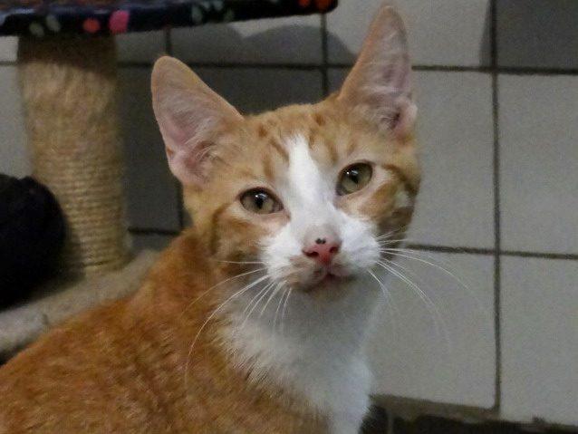 OWEN – 7 mois – chaton intrépide