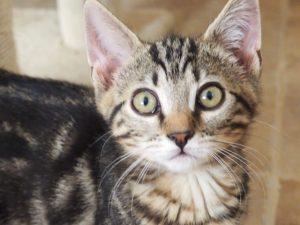 PEANUTS - 3 mois 1/2 - joli chaton