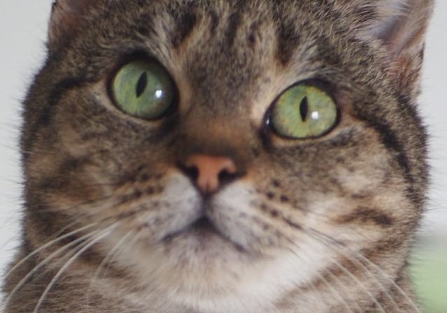 KOUMBA – 5 ans – adorable «chatte-genoux»