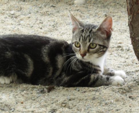PACHA – 5 mois – chaton timide