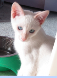 PADY - 4 mois 1/2 - chaton tranquille
