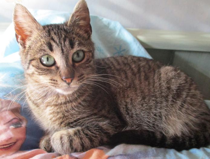 PAMM – 1 an – féline aux yeux émeraude, un petit bijou