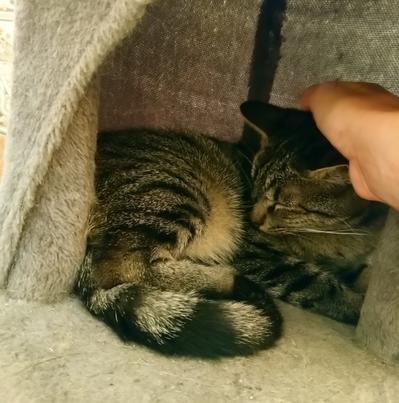 PASTELLE –  née le 01/07/2019 – jeune chatte discrète