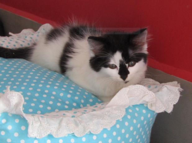 PAT – 3 mois 1/2 – jolie chatonne curieuse