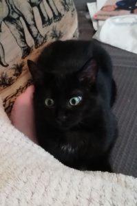 PATOUNE - 5 mois - chaton aventureux mais prudent