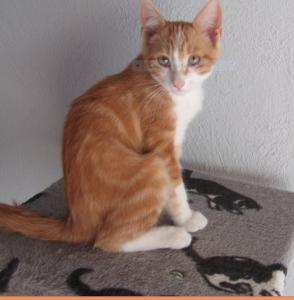 PEPSI - 4 mois 1/2 - chaton bien sage