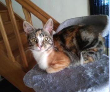 PERLE – 8 mois – jeune chatte calme