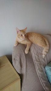 PIERROT - 10 mois -  chat dynamique et indépendant