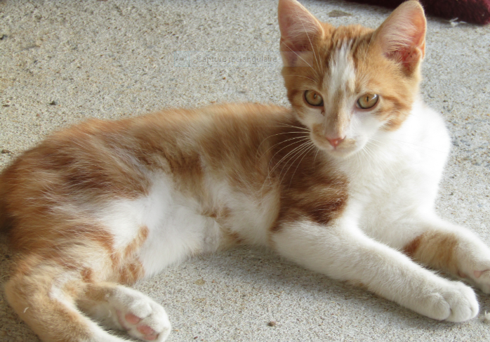 PLOUF – 4 mois 1/2 – chaton discret
