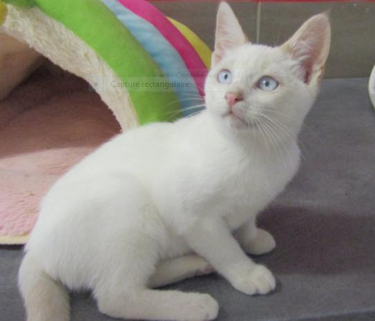 POLLEN – presque 4 mois – adorable chaton