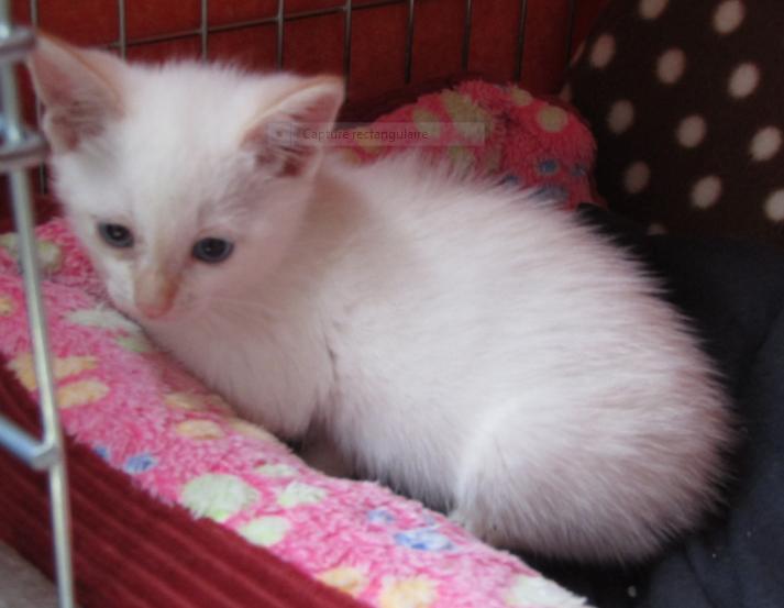 PADY – 3 mois 1/2 – chaton timide