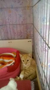 PRINCE - chaton né le 01/05/2020