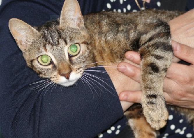 PRINCESSE – jeune chatte née le 01/10/2019