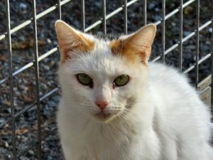 PRISCA - 4 ans - chatte exclusive