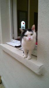 MANGO - sympathique  chat adulte
