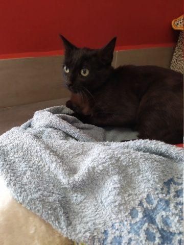 ROBIN – 8 mois – jeune chat discret