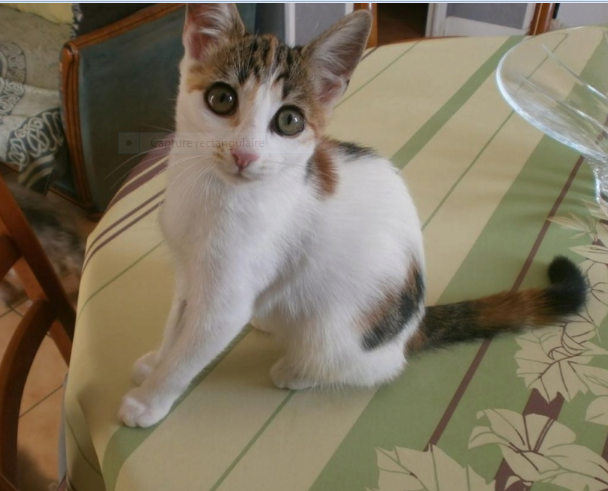 ROMY – chatonne née le 15/05/2020
