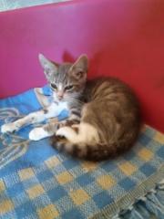 RUDY – 3 mois – chaton câlin