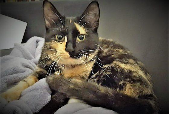 La petite chatte de radhia - 4 2