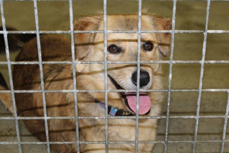 Thim chien mâle croisé Griffon 1 an et demi