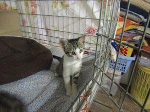 OPPY - 3 mois 1/2 - gentil chaton