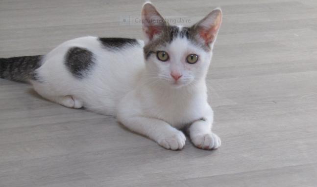 PIXOU – 6 mois – chaton énergique et vif