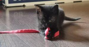 XENA - petite chatonne noire (pour réservation)